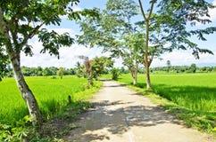 Rice gospodarstwo rolne dwa fotografia stock