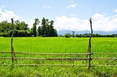 Rice gospodarstwo rolne dziewięć fotografia royalty free