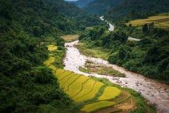 Rice gospodarstwo rolne w dolinie Obrazy Royalty Free