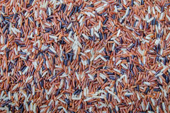 Rice grain as background texture.  Royalty Free Stock Images