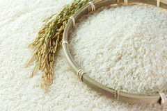 Rice grain. Close-up image of paddy and rice grain Stock Image