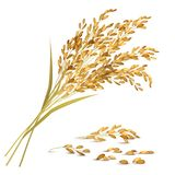 Rice Grain Illustration. Rice ears and grain with harvest and agriculture symbols realistic vector illustration Royalty Free Stock Photo