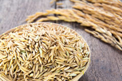 Rice grain Royalty Free Stock Image