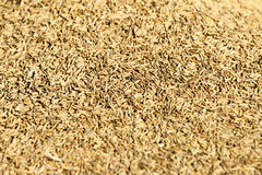 Rice grain Stock Images