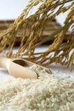 Rice grain Stock Image