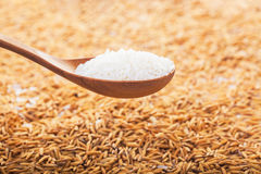 Rice grain in a wooden spoon. Food background. rice grain in a wooden spoon and forming a background royalty free stock image
