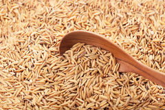 Rice grain in a wooden spoon. Food background. rice grain in a wooden spoon and forming a background. with copyspace Royalty Free Stock Images