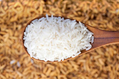 Rice grain in a wooden spoon Stock Image