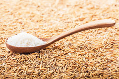 Rice grain in a wooden spoon and forming a background. Food background. rice grain in a wooden spoon and forming a background Royalty Free Stock Photography