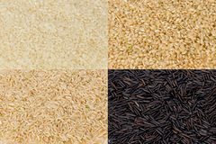 Rice Grains Royalty Free Stock Images