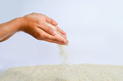 Rice Grains Fall Royalty Free Stock Image