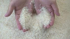 Rice grains in the hands. Unprocessed rice being poured from a man's hands. Closeup stock video