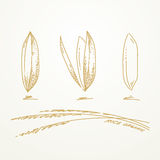 Rice grains, Sketch hand drawn Royalty Free Stock Images