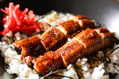 Rice with grilled eels Japanese food Royalty Free Stock Photography