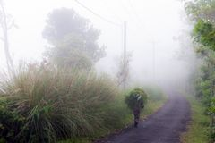 A rice grower walks in the fog. With his load of brushwood Stock Photography