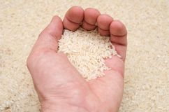 Rice in hand Royalty Free Stock Photography