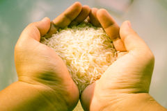 Rice in hand Royalty Free Stock Image