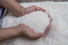 Rice with hand holding Stock Photo