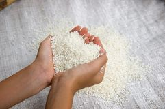 Rice on hand Royalty Free Stock Photo