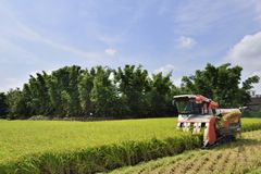 Free Rice Harvest. Royalty Free Stock Images - 98412799