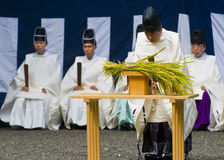 Rice harvest ceremony royalty free stock photography