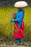 Rice harvest ceremony royalty free stock photos