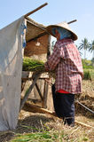 Rice harvest II. Woman extracts the rice on manual machine. Lombok, Indonesia Stock Photo