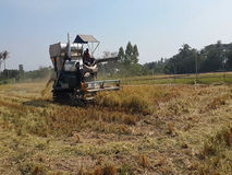 Rice harvest machine stock video footage