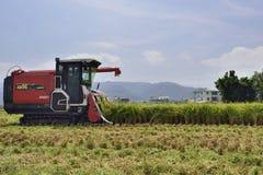 Rice harvest. Stock Photos