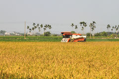 Rice harvester Royalty Free Stock Images
