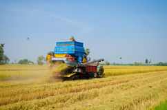 Rice harvester in rice fields Royalty Free Stock Photography