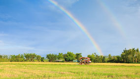 Rice harvester working on the field with rainbow sky background Stock Photo
