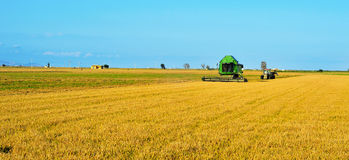 Rice harvesting. A combine harvester harvesting a paddy field in Ebre Delta, Catalonia, Spain Stock Photography
