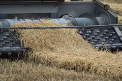 Rice harvesting by the combine Stock Photography