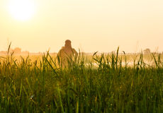 Rice herbicide spraying. Farmers spray herbicide in rice leaves with dew catch the morning sun Royalty Free Stock Photography
