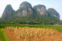 The rice and the hill. Yangshuo. China. Stock Photos