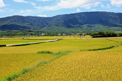 Rice Hometown in Taidong,Taiwan Royalty Free Stock Photography