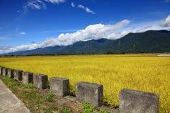 Rice Hometown in Taidong,Taiwan Stock Photo