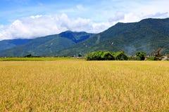 Rice Hometown in Taidong,Taiwan Stock Image