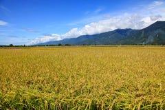 Rice Hometown in Taidong,Taiwan Stock Photos