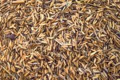 Rice hulls. Close up group  of yellow and brown rice hulls Stock Image