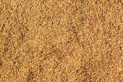 Rice Husk Royalty Free Stock Photos