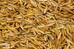 Rice husk,cultivating materials Royalty Free Stock Photo