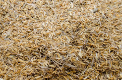 Rice husk Royalty Free Stock Images