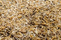 Rice husk Stock Photography