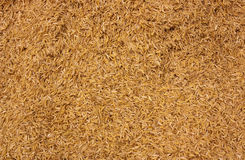 Rice husk Royalty Free Stock Image