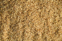 Rice husks Royalty Free Stock Photo