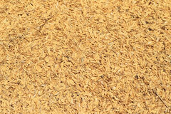 Rice husks of chaff Stock Images