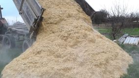 Rice husks. The rash of rice waste from the body of the trailer. Rice husks stock footage