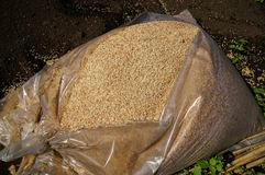 Rice husks , Royalty Free Stock Image